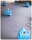 carpet drying and cleaning